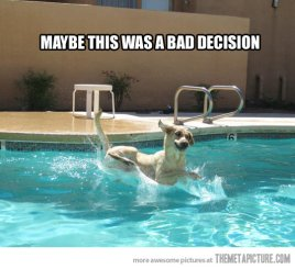 funny-dog-scared-water-swimming-pool